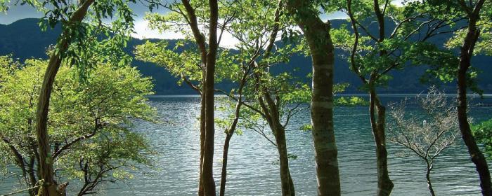 地域の皆様のやすらぎの森になりたいと願っています