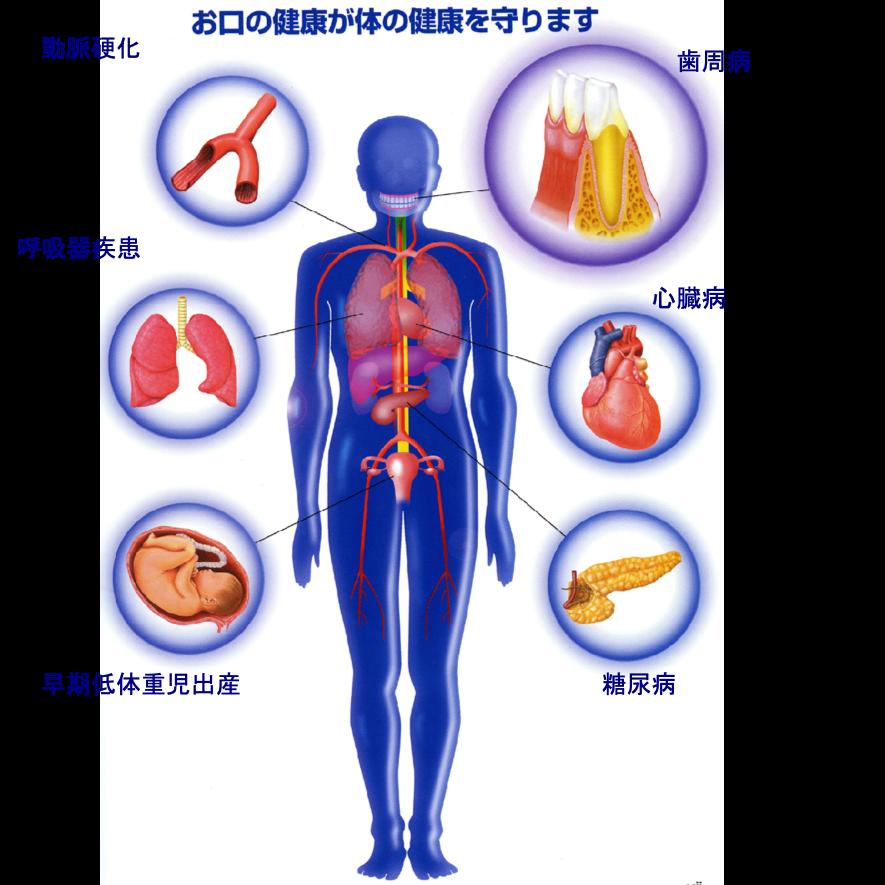 動脈硬化などの血管系の病気 ・心臓の病気・肺炎などの呼吸器疾患・早期低体重児出産・糖尿病