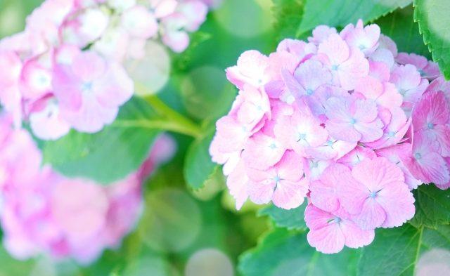 7月の休診日 ~東久留米 ひばりの森歯科