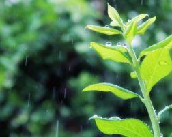 急な雨のときには・・・